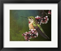 Framed Hummer with Blossoms
