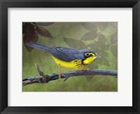 Framed Canada Warbler