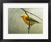 Framed Prothonotary Warbler