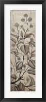 Branch & Blossoms II Framed Print
