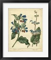 Framed Garden Flora V
