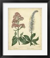 Framed Garden Flora VI