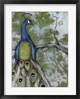 Peacock Reflections II Framed Print