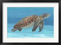 Ocean Sea Turtle I Framed Print