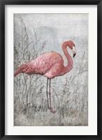 American Flamingo I Framed Print