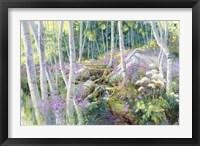 Framed Aspen Glade
