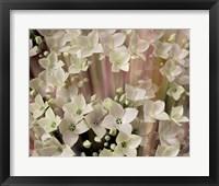 Soft Floral I Framed Print