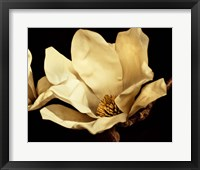 Buttercream Magnolia I Framed Print