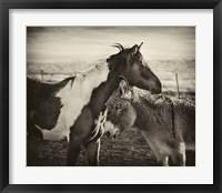 Framed Kissing Horses II