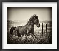 Framed Running Horse