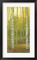 Sunny Birch Grove I Framed Print