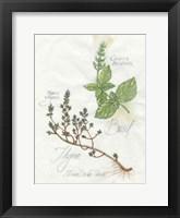 Basil & Thyme Framed Print
