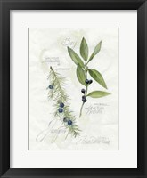 Bay Leaf & Juniper Framed Print