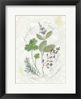 Parsley & Sage Framed Print