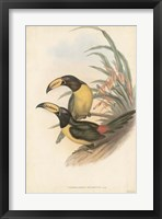Framed Tropical Toucans IV