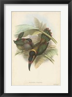 Framed Tropical Toucans VI