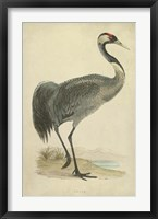 Framed Morris Crane I