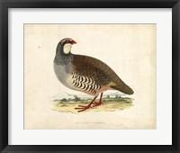 Framed Morris Pheasants II