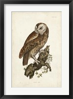 Framed Tawny Owl