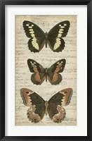 Butterfly Script I Framed Print