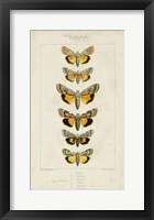 Framed Pauquet Butterflies I