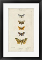 Framed Pauquet Butterflies IV