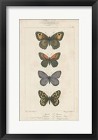 Framed Pauquet Butterflies V