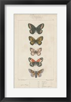 Framed Pauquet Butterflies VI