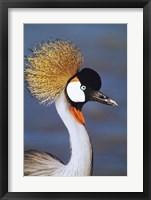 Framed Crowned Crane Tanzania Africa