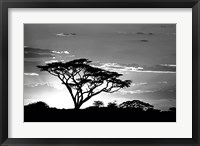 Framed Silhouette of Trees in Black and White, Ngorongoro Conservation Area, Arusha Region, Tanzania