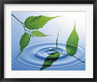 Framed Two branches with green leaves floating above blue water ripples