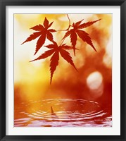 Framed Selective focus of red leaves above water ripples