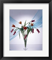 Framed Long stemmed bouquet of dark pink tulips in a small vase draped with light blue sheer fabric