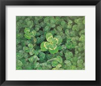 Framed Close up of green clover