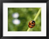Framed Ladybug on a stem