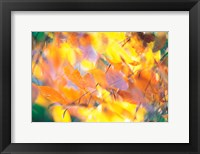 Framed Fallen Leaves on Ground with Backlit, Autumn