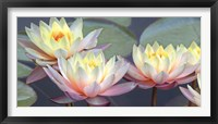 Framed Lotus Panorama