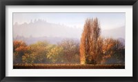 Framed Vineyard Mist