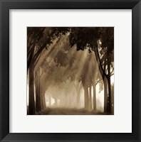 Framed Misty Grove