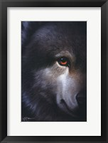 Framed Endangered Wolf