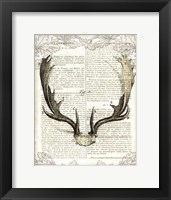Framed Regal Antlers on Newsprint II