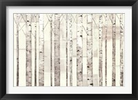 Framed Birch Trees on White