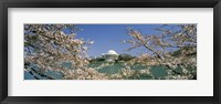 Framed Cherry blossom with memorial in the background, Jefferson Memorial, Tidal Basin, Washington DC, USA