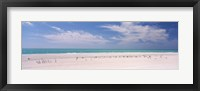 Framed Flock of seagulls on the beach, Lido Beach, St. Armands Key, Sarasota Bay, Florida, USA