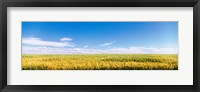 Framed Farm field Twin Falls ID USA