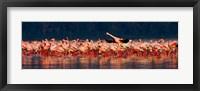 Framed Lesser flamingos in a lake, Lake Nakuru, Lake Nakuru National Park, Kenya