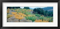 Framed Cherry trees in an orchard, Provence-Alpes-Cote d'Azur, France