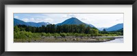 Framed Quinault Rainforest, Olympic National Park, Olympic Peninsula, Washington State