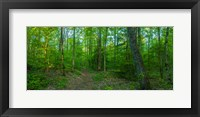 Framed Forest, Great Smoky Mountains National Park, Blount County, Tennessee, USA