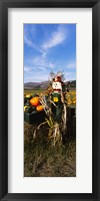 Framed Scarecrow in Pumpkin Patch, Half Moon Bay, California (vertical)